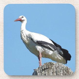 White Stork with blue sky Beverage Coaster