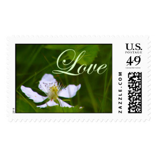 White Strawberry Blossom Love Stamps