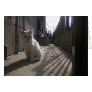 White Stray Kitten in Japan Greeting Cards
