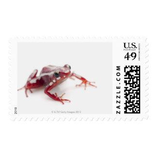 White-striped Poison Dart Frog 2 Postage