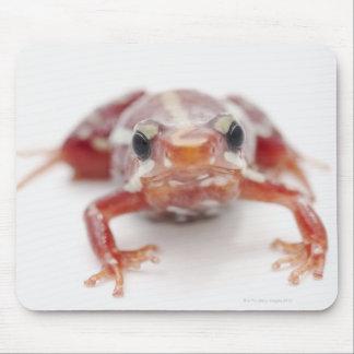 white-striped poison dart frog (epipedobates mouse pad