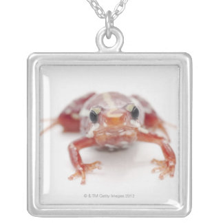 white-striped poison dart frog (epipedobates silver plated necklace