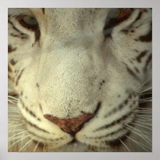 White Striped Tiger Print
