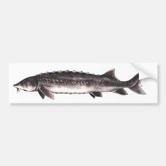 White Sturgeon - Acipenser transmontanus Bumper Stickers