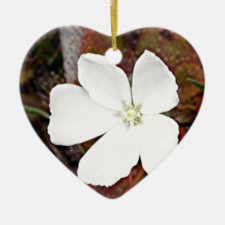 White sundew flower in bloom ceramic ornament
