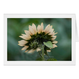 White Sunflower Greeting Card