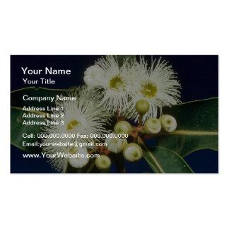 white Swamp mahogany (Eucalyptus robusta) flowers Business Card