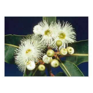 white Swamp mahogany (Eucalyptus robusta) flowers 5x7 Paper Invitation Card