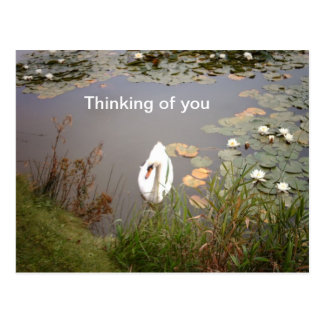 White swan and waterlilies postcard