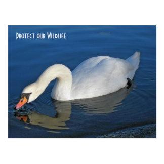 White Swan at Hyde Park, London England Postcard