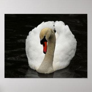 White Swan, Black Lake Poster