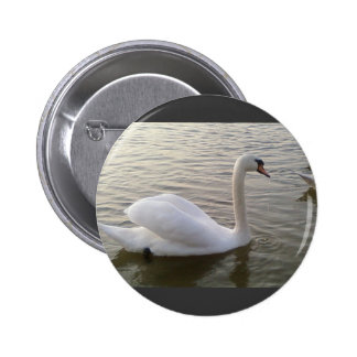 White Swan Close Up Picture 2 Inch Round Button