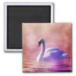 White Swan floating on a misty lake 2 Inch Square Magnet