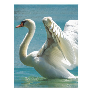 White Swan Letterhead