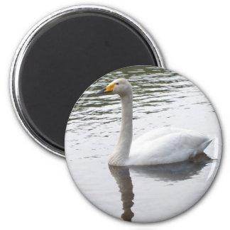 White Swan Magnet