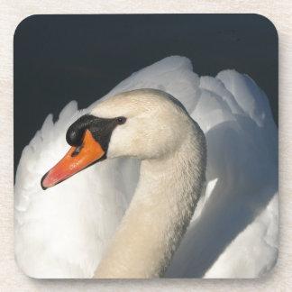 White Swan majestic bird in water Beverage Coasters