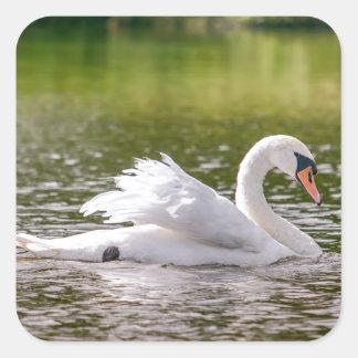 White swan on a lake square sticker