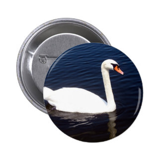 White swan on still waters button