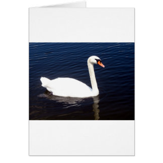 White swan on still waters greeting cards