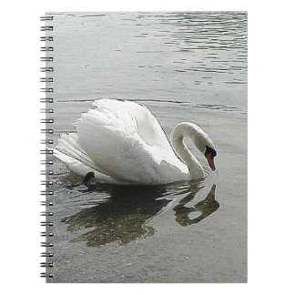White swan, reflecting in the grey water journals
