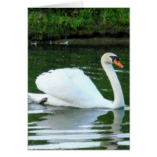 "White Swan/ ""You Exude Gracefulness & Beauty"" birt Card"