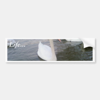 White Swans Bumper Sticker