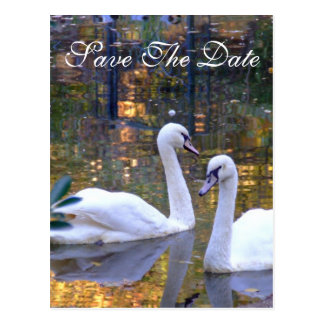 White Swans Save the Date Post Card