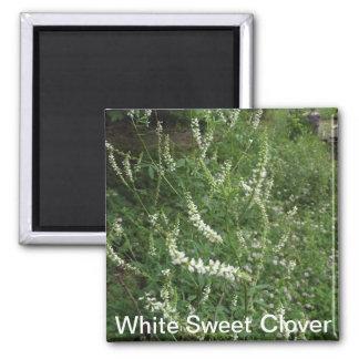White Sweet Clover Magnet
