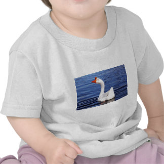 white swimming goose in blue water tees