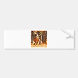 White Tail Buck Bumper Sticker