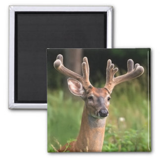White-Tail Deer 10 Point Buck 2 Inch Square Magnet