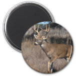 White Tail Deer 2 Inch Round Magnet