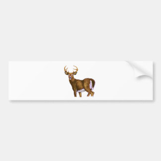White Tail Deer Buck Bumper Stickers
