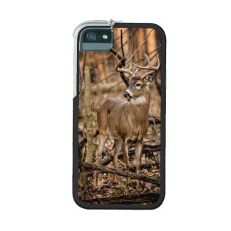 White Tail Deer Buck Case For iPhone SE/5/5s