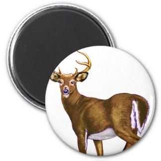 White Tail Deer Buck Magnet