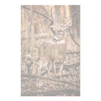 White Tail Deer Buck Stationery