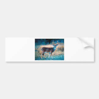 White Tail Deer Bumper Stickers