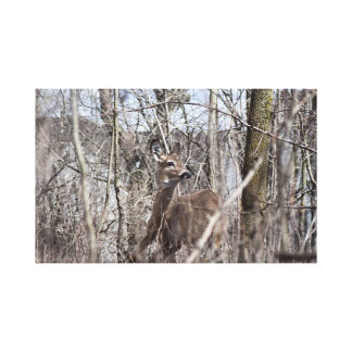 White Tail Deer Gallery Wrap Canvas