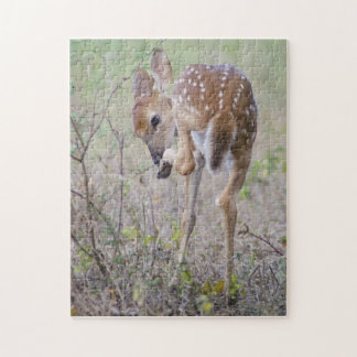White-tail Deer Fawn licking hoof Wildlife Puzzle