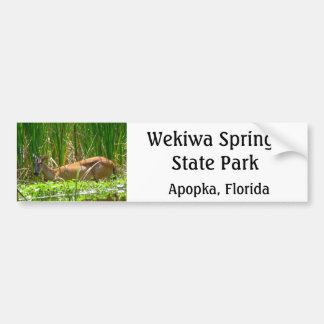 White tail deer in wekiwa springs state park bumper stickers