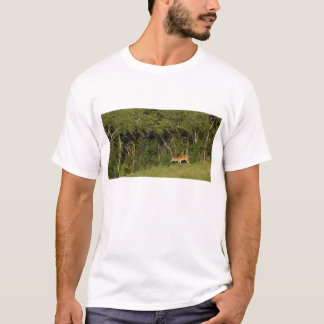White Tail Deer Keds Doug LaRue Shirt