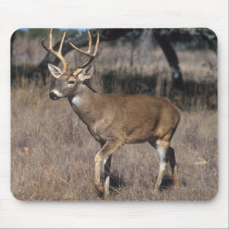 White Tail Deer Mouse Pad