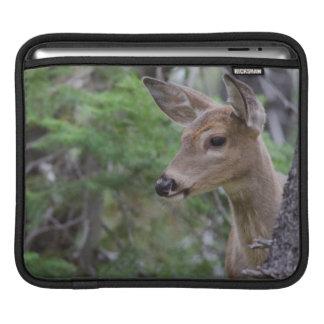 White Tail Deer Portrait Fishercap Lake iPad Sleeve
