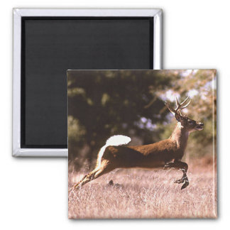 White-Tail Deer Running Magnet