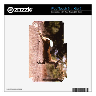 White-Tail Deer Running iPod Touch 4G Decals