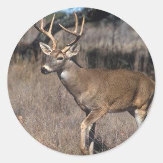 White Tail Deer Classic Round Sticker