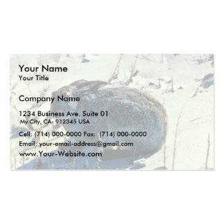 White-tail Jackrabbit Business Cards