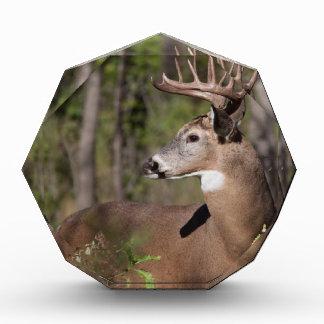 White Tail Ten Point Buck Award