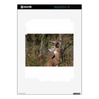 White Tail Ten Point Buck Decal For iPad 2