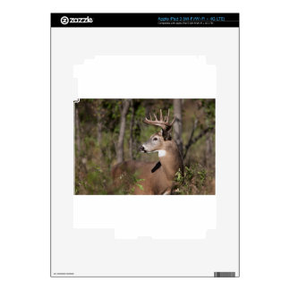 White Tail Ten Point Buck Decals For iPad 3